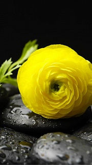 Yelow Flower 3 Kupon