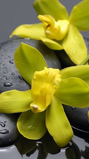 Orchideya Yelow 1 Kupon